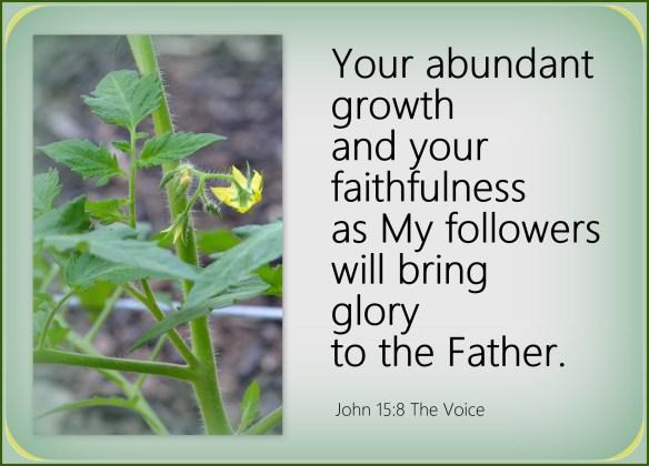 John 15-8