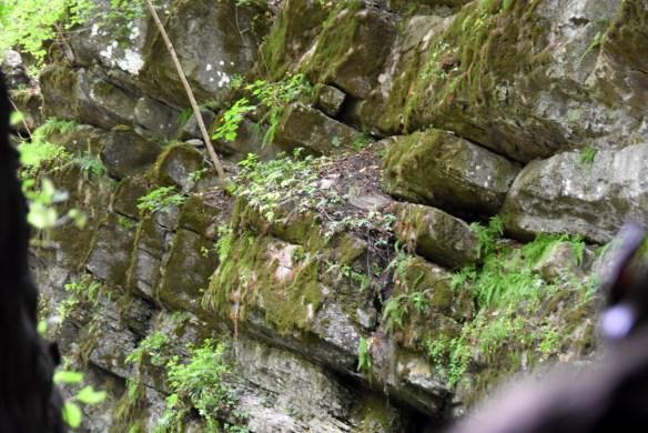 Penn's Cave (36)
