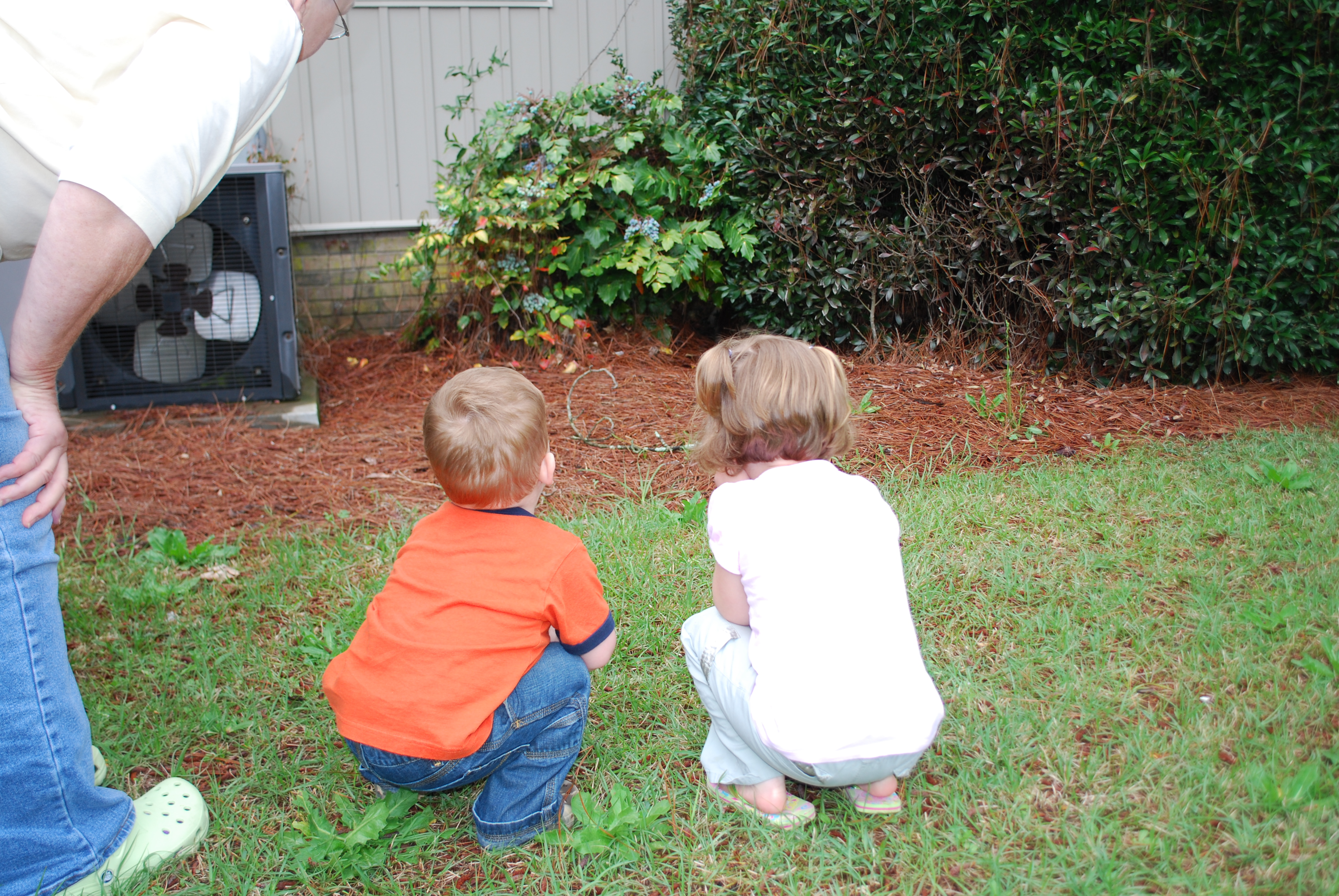 The kids taking a peek at what is under the bush
