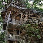 Tallest Tree House In The World Designs Ideas On Dornob