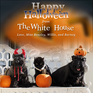 First Family pets get in the Halloween spirit, Friday, Oct. 17, 2008, in a portrait on the Blue Room balcony on the south side of the White House. From left are Miss Beazley, Willie the cat, and Barney. The dogs are Scottish Terriers. White House photo by Joyce N. Boghosian