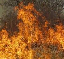 Bajóton négy hektáron pusztítottak a lángok