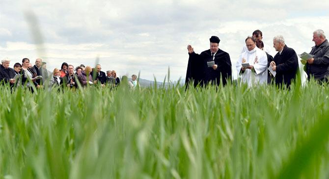 Országos búzaszentelőt tartottak Esztergomban