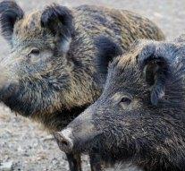 Kilövik a nyergesújfalui ingatlanokban károkat okozó vadakat