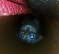 Lefolyócsőbe szorult egy kiscica Piliscsabán