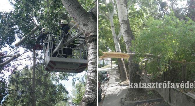 Továbbra is kidőlt fák miatt vonultak a tűzoltók