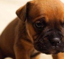 Segítség a Bogáncs Kutyaotthonnak