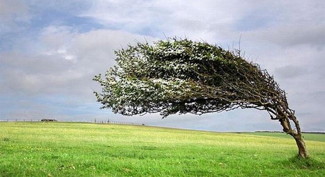Elsőfokú riasztás erős szél veszélye miatt