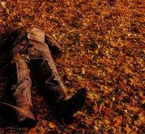 Feldarabolt holttesteket találtak a pilisszentiváni erdőben