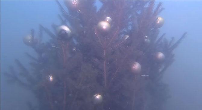 A Palatinus-tó mélyén is ünneplik a karácsonyt