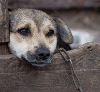Vádat emeltek egy nyergesújfalui állatkínzó nő ellen