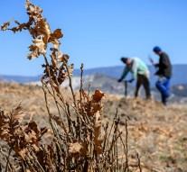 Ötszázötven hektár erdőt telepített a Pilisi Parkerdő