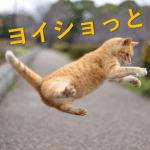 猫のジャンプの高さはどれくらい?走るスピードは?短距離専門で長距離は苦手?