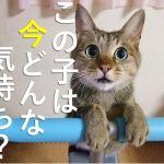 猫のヒゲで気持ちを読み取る方法やコツは?遊びたい顔が一目瞭然!