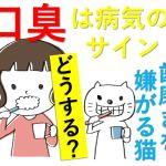 猫のハミガキで口臭予防?キツイにおいは病気を疑うこと!