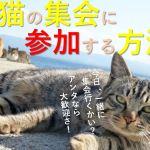 猫が集会する理由や意味とは?人が招待される方法があるって本当?