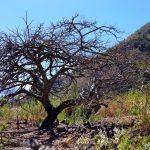 Our favourite tree in DYZC at Lake Atitlan