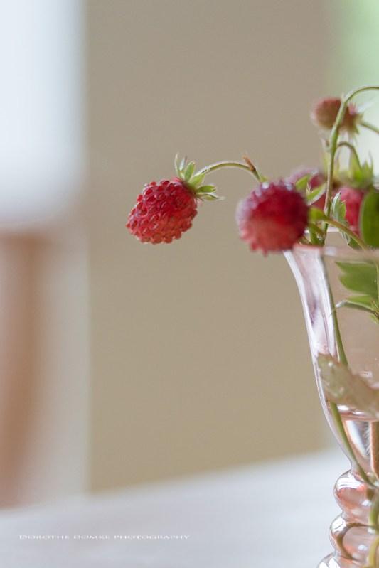 Erdbeerzeit pg 002