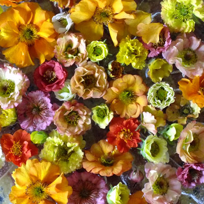 Geums in bowl