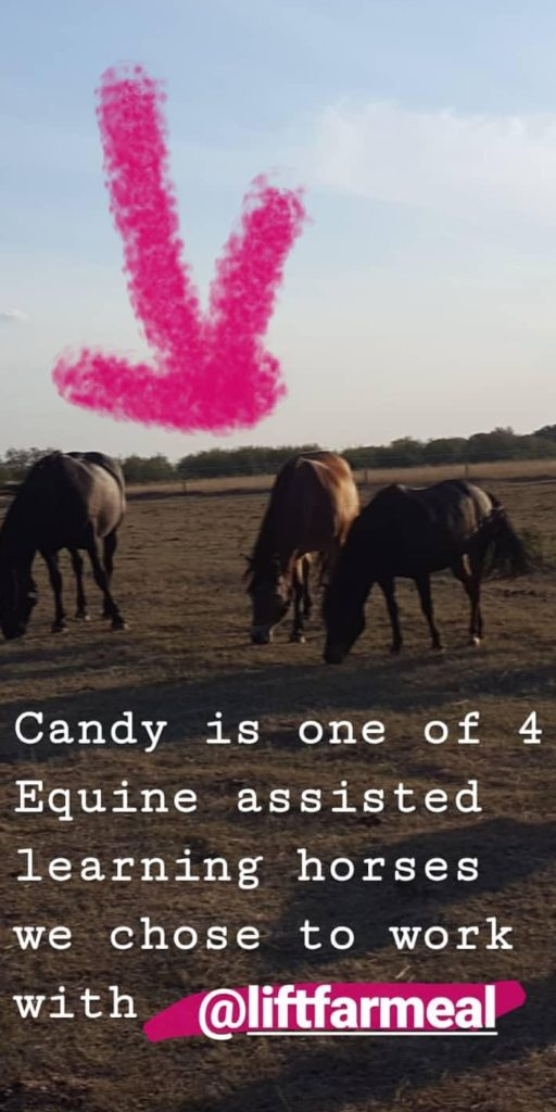 Equine Assisted Couples Communication Course