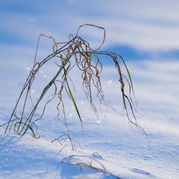 Spessart im Schnee