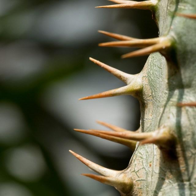 Palmengarten Makroaufnahme