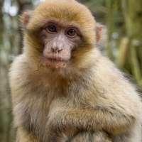 3 Affen von süß bis supersüß....