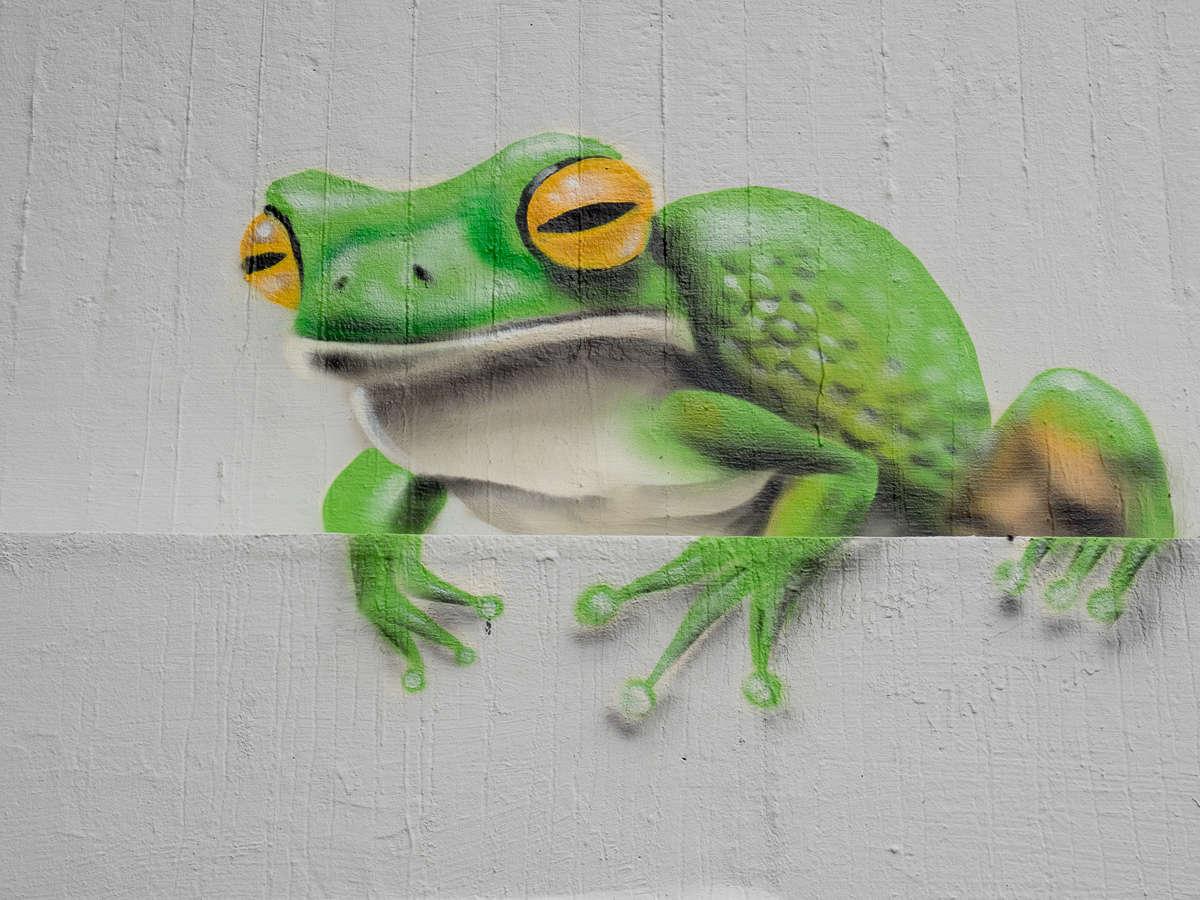 Graffiti in Frankfurt – Das Dreckige Dutzend Teil 2 in Ginnheim 2018 (Alle Ergebnisse)