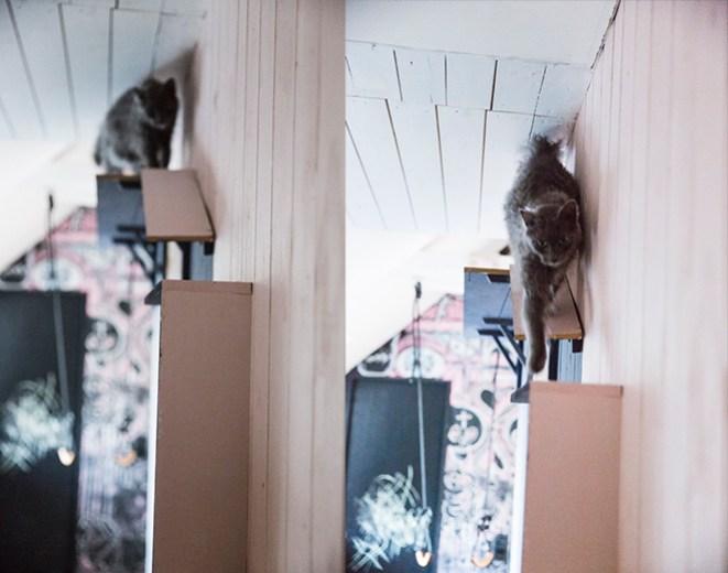 dosfamily-cat-nest