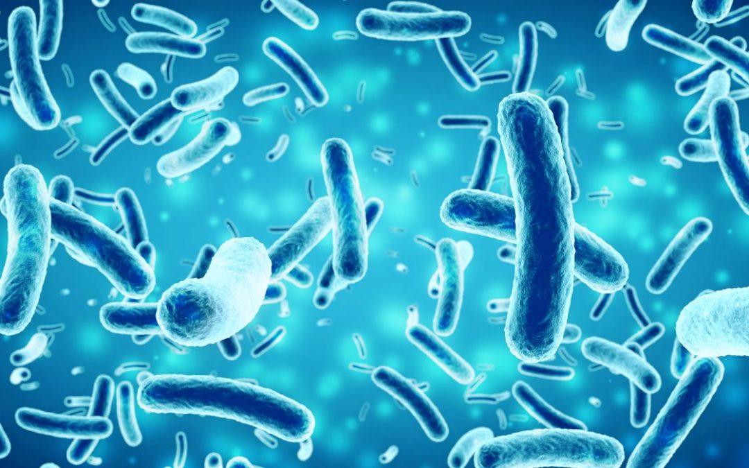 Your Ayurvedic Dosha Types and Microbiome