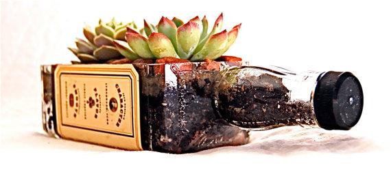 plante suculente idee