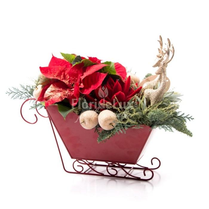 craciunite flori la ghiveci in saniuta, un aranjament de craciun perfect precum decoratiune masa de craciun