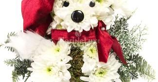 Flori de Mos Nicolae