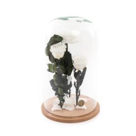 Trandafiri in cupola My Pearls, doar 529,99 RON!