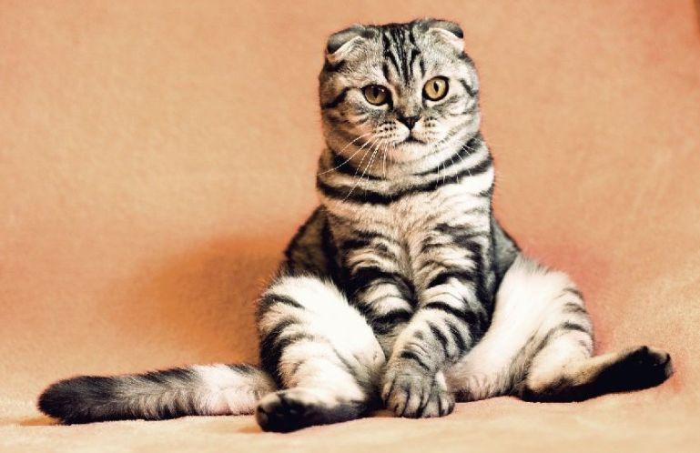 Как ухаживать за котом