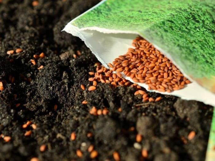 Какие семена покупать?
