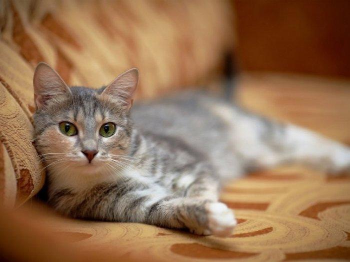 Как влияют домашние животные на энергетику дома?