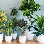 10 лучших подкормок для ваших комнатных цветов, которые оживят даже сухой куст