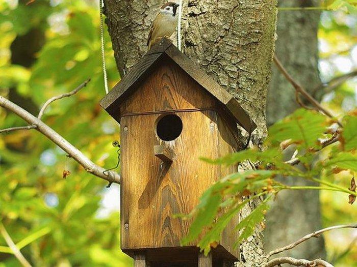 Какое жильё понравится вернувшимся птицам