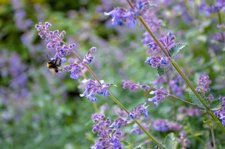 5 растений, которые помогут вам избавиться от комаров