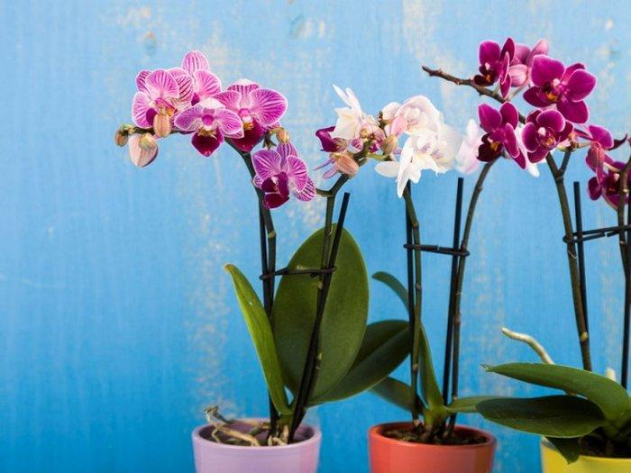 Что сделать, чтобы размножить орхидею и превратить ее в гордость дома
