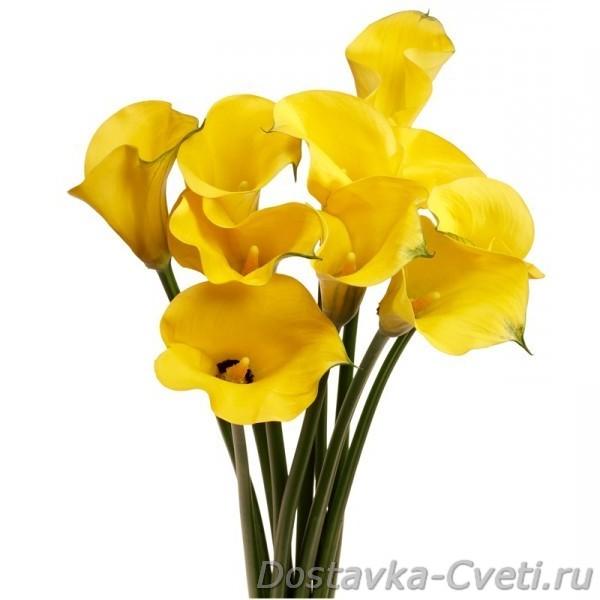 Dostavka-cveti.ru — доставка цветов по Москве | свадебный ...