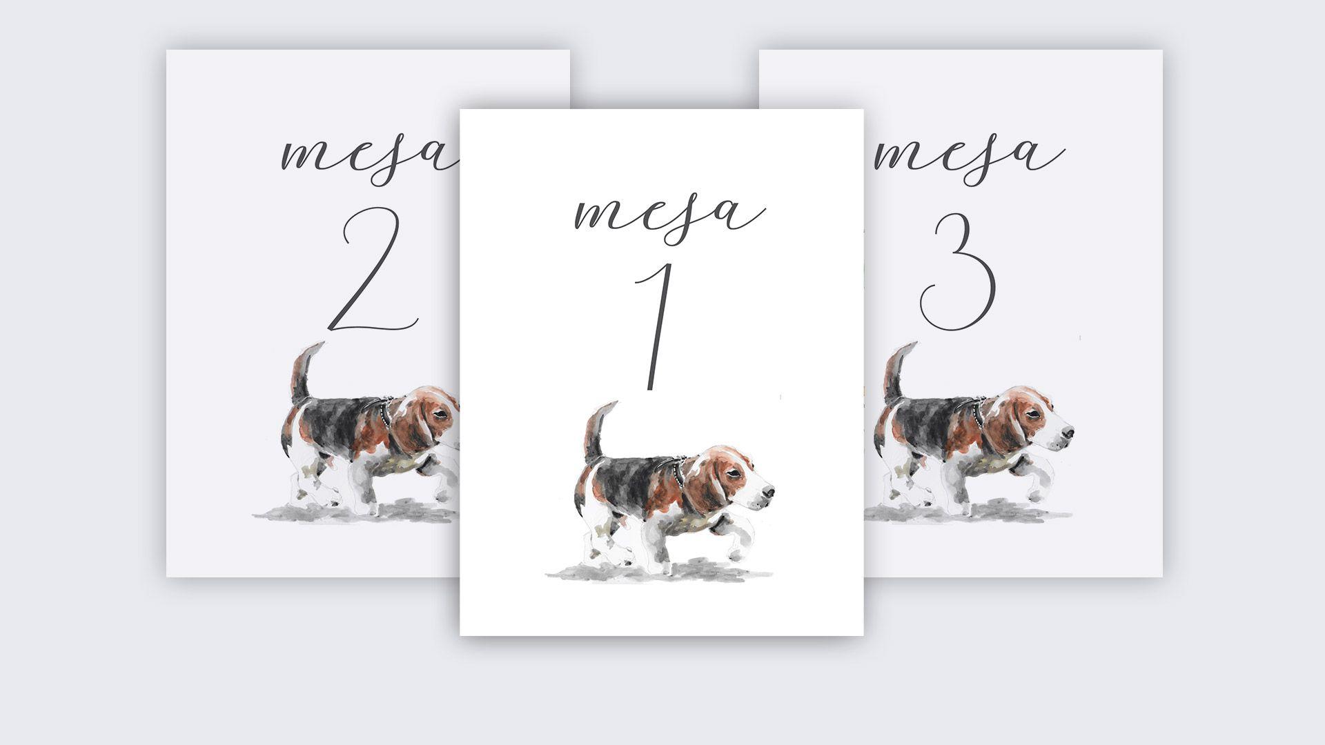 mesero beagle perro boda