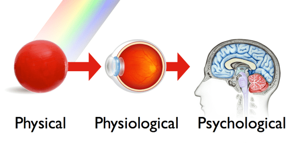 The color of objects that our eyes see in nature is determined by three things: physical, physiological and psychological.