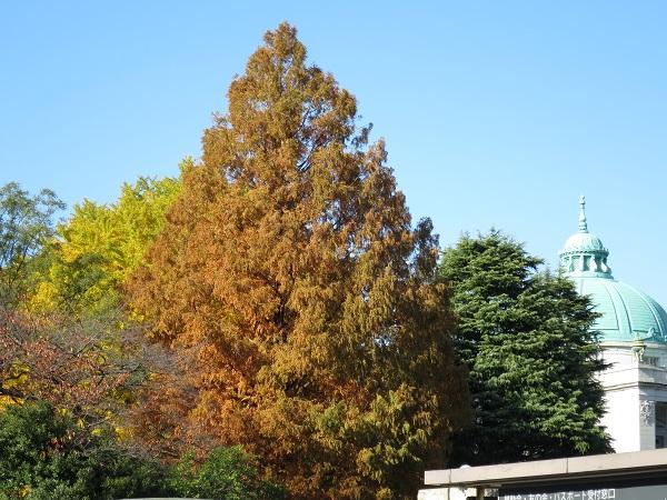 西洋美術館内の紅葉