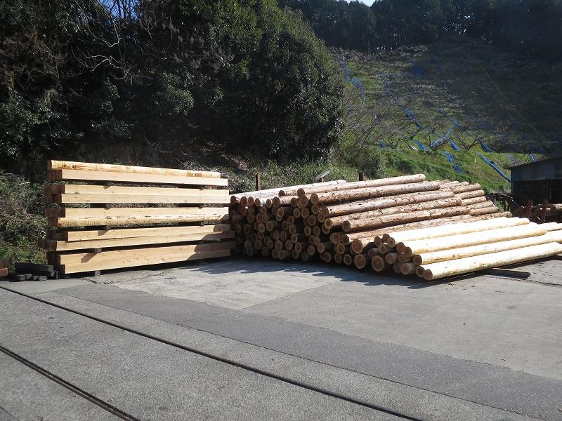 杉の原木丸太が並んでします