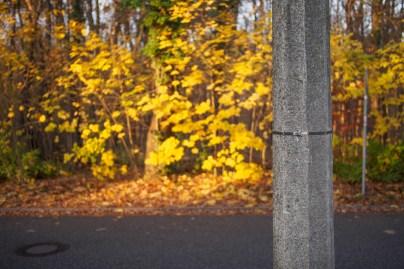 autumnal post
