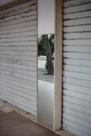 mirror tree