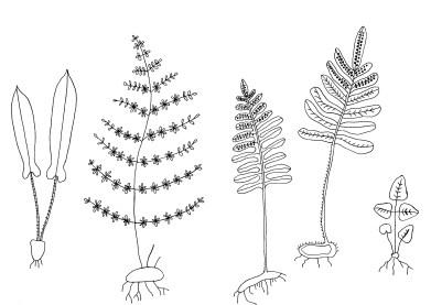 Botanicals by Maria Larsson - Dot Oddity