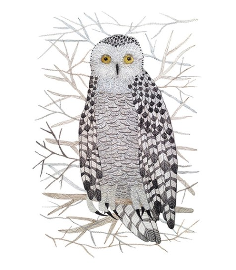 Birds snowy owl by Holly Ward Bimba
